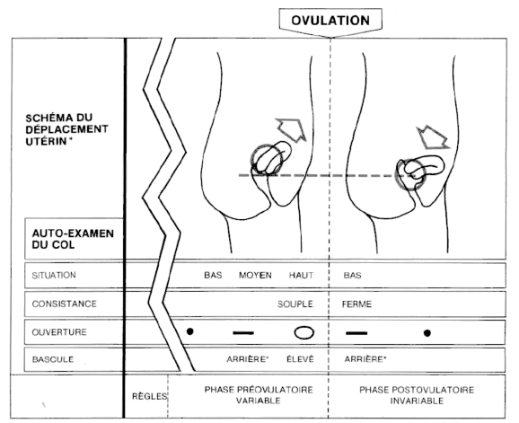 Signes-ovulation-du-cycle-au-col