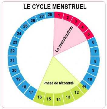 the-menstrual-cycle